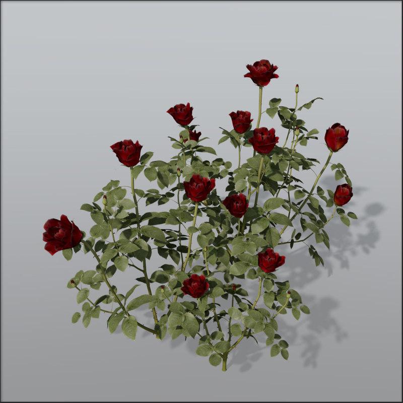 Rose_bush_Bundle1.jpg