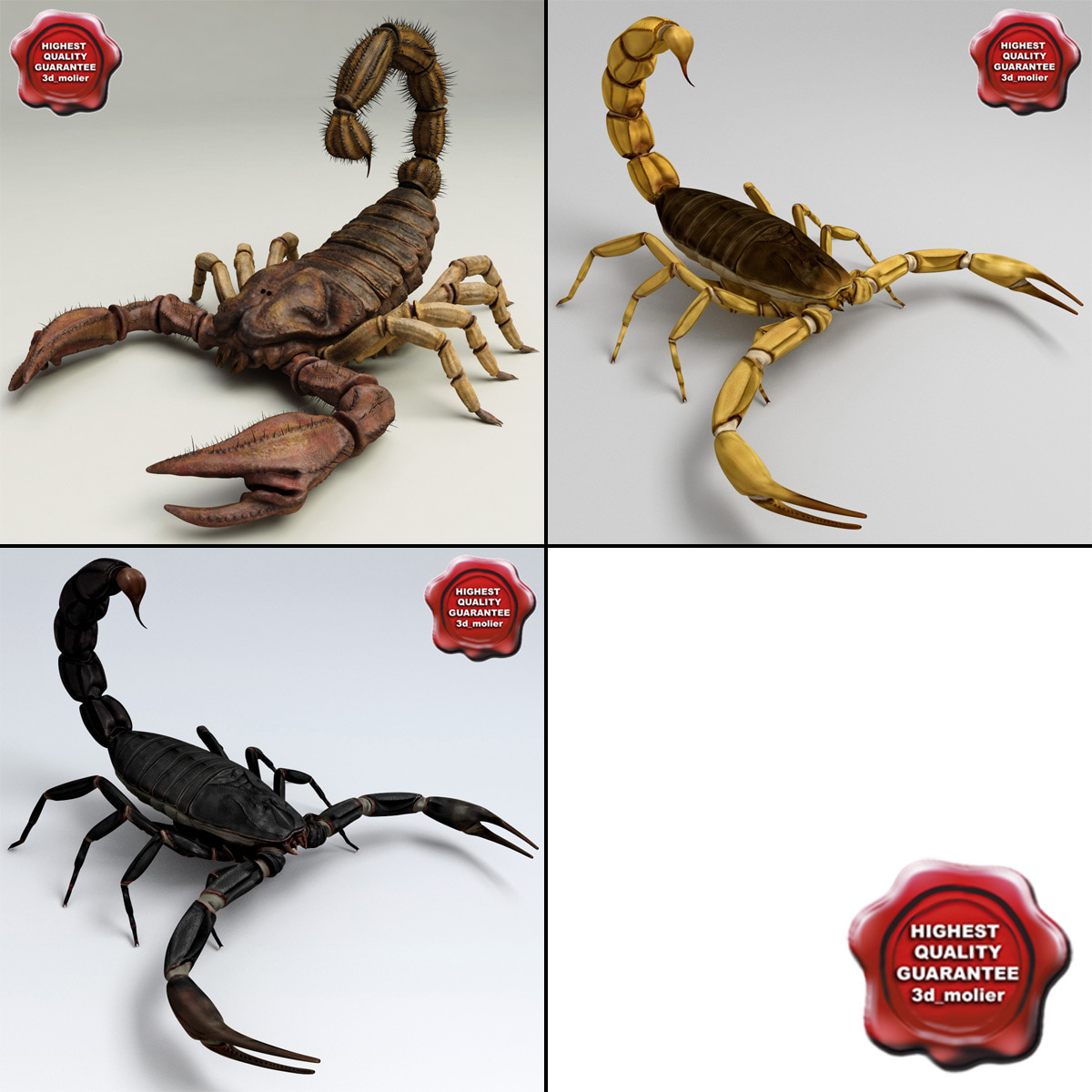 Scorpions_Collection_00.jpg