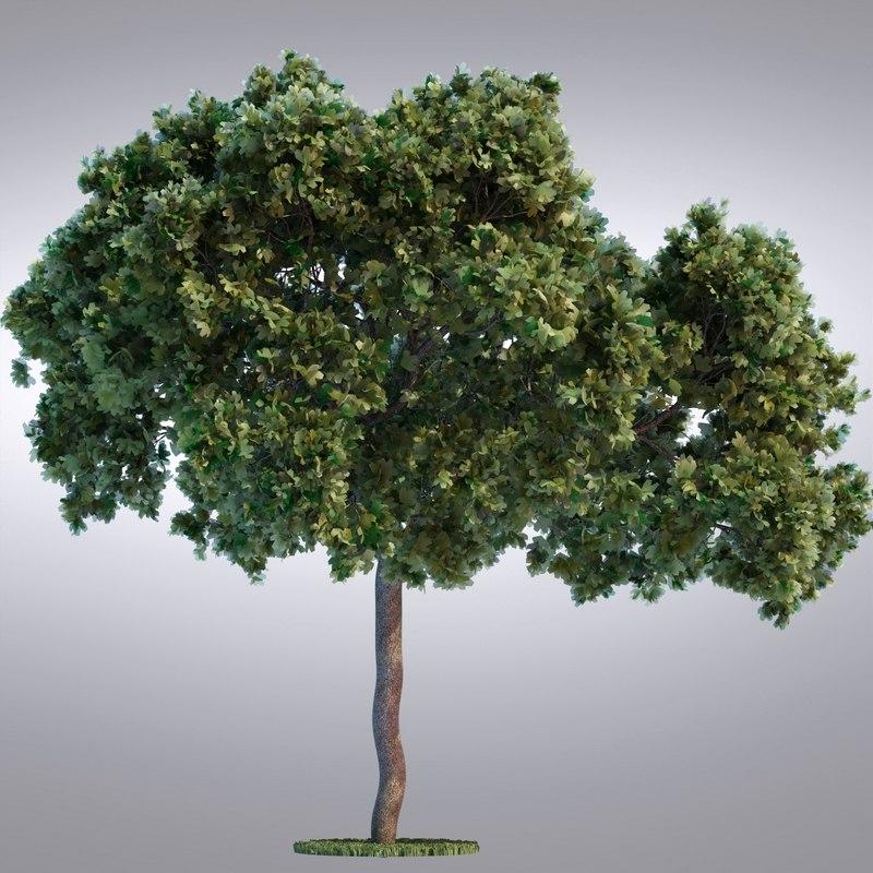 tree95_0001.jpg