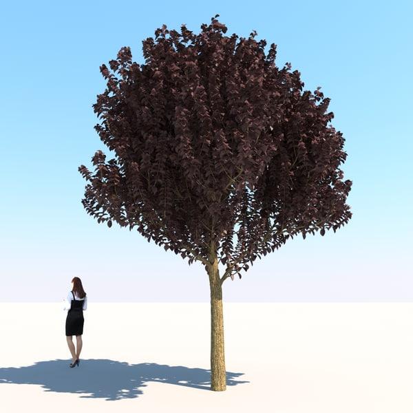 HQ Vegetation - Purple Leaf Plum Tree Texture Maps