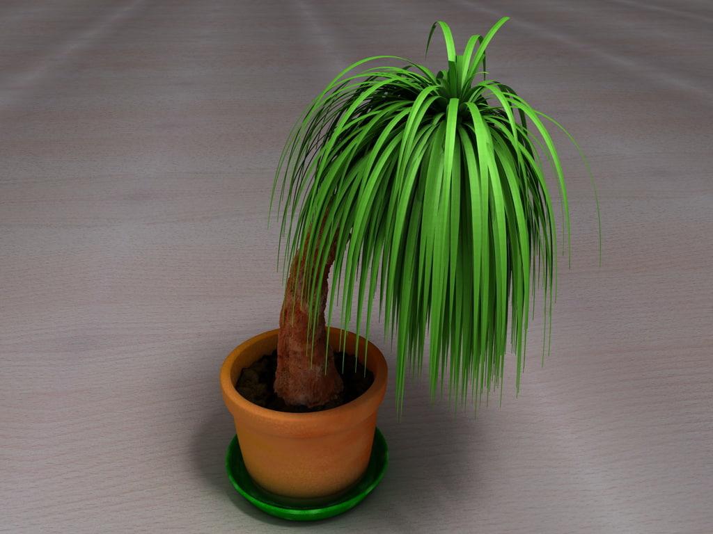 Palme001.jpg