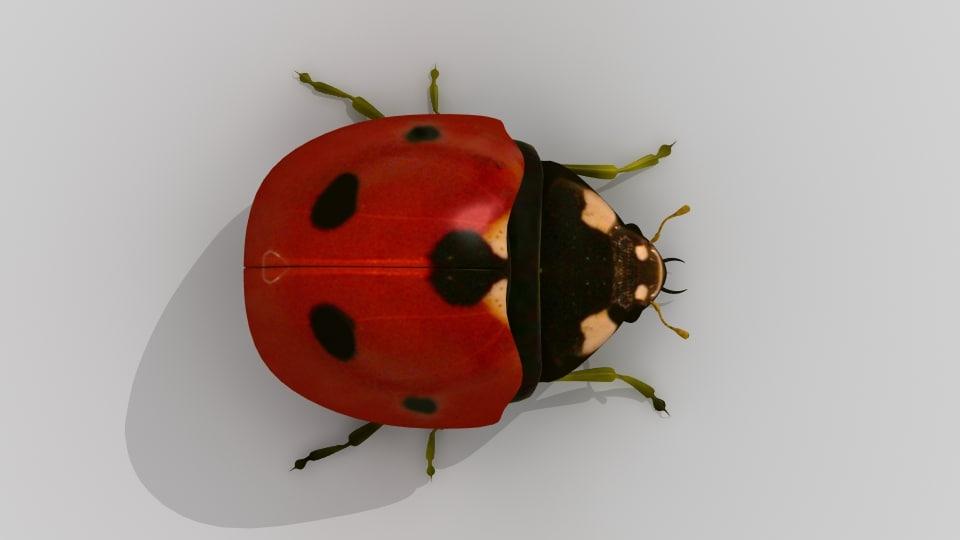 LadyBug_007.jpg