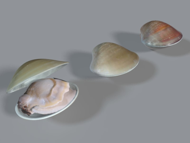clam_render1.png