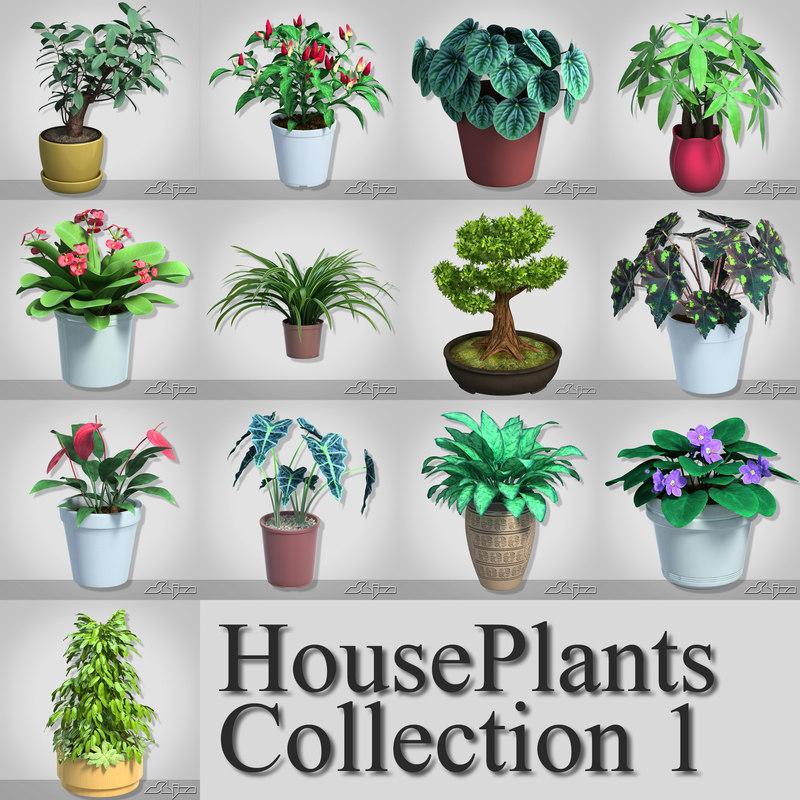 HouseplantsCollection1.jpg