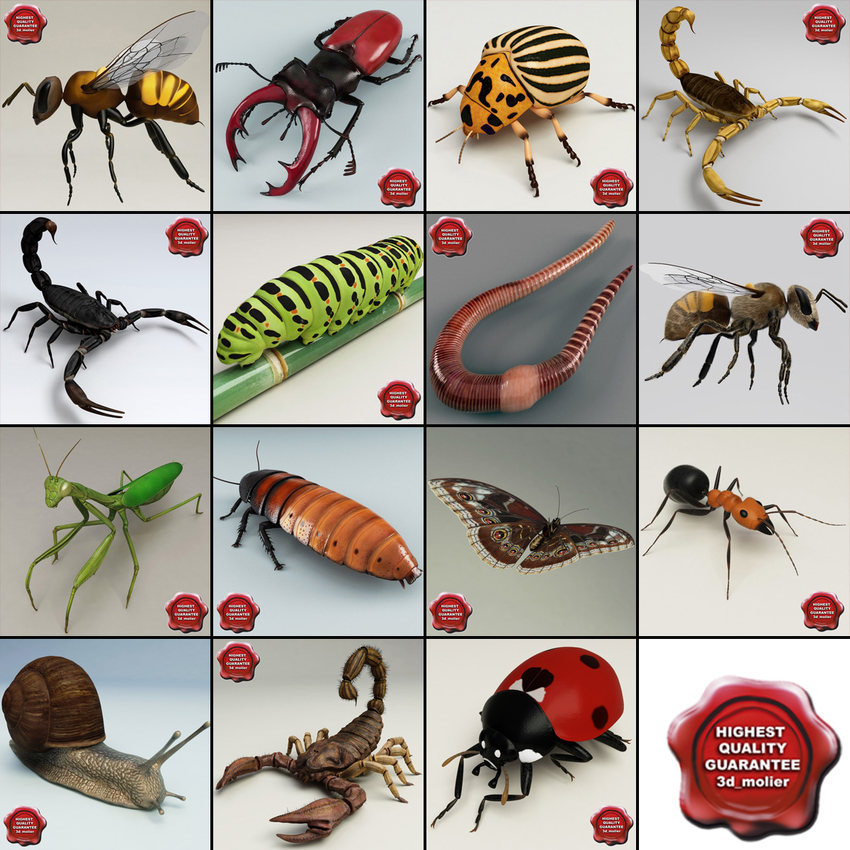 Insects_Collection_V6_000.jpg