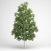 white birch 3D models