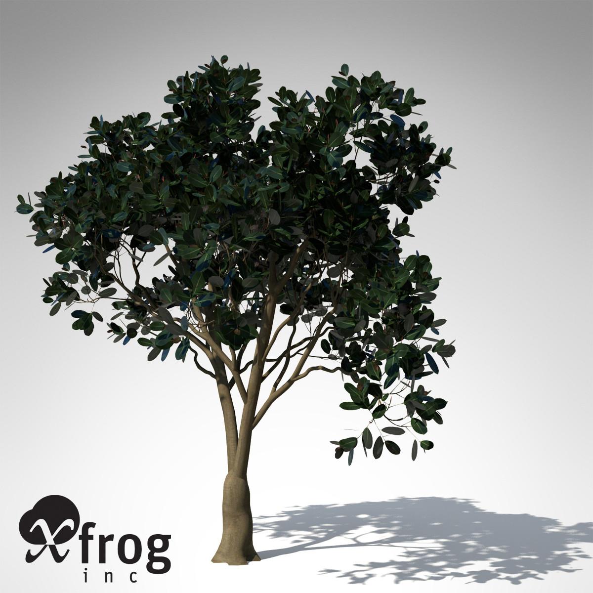 XfrogPlants Rubber Fig