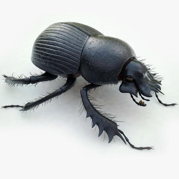 Dung Beetle 3D Models