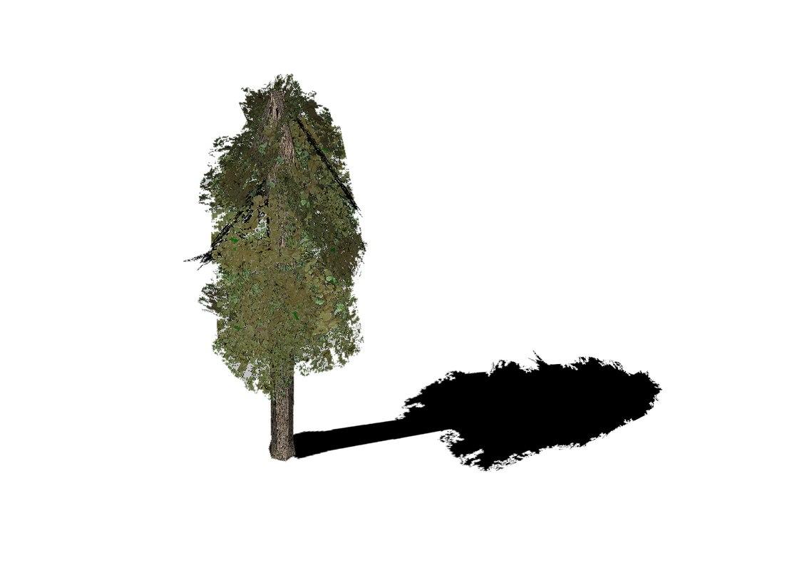 tree_main_view.png