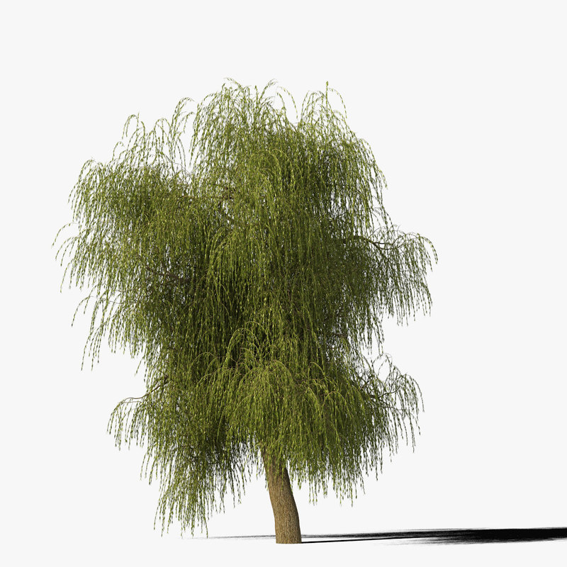 willow_typ7_render_f_0005.jpg