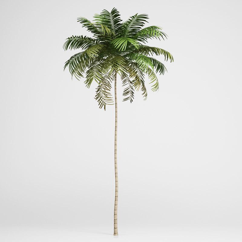 CGAxis Areca Palm 01