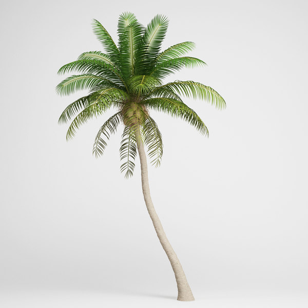 CGAxis Coconut Palm 04 3D Models