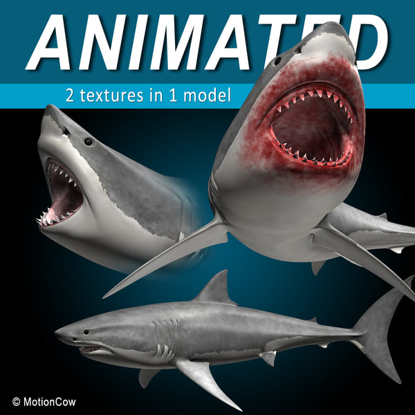 Great White Shark 3D Models