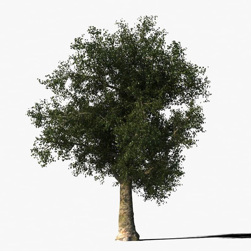 platanus_typ011_render_f_0005.jpg