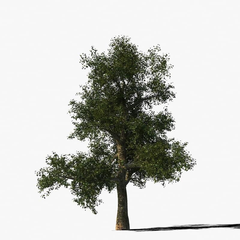 platanus_typ1_render_f_0005.jpg