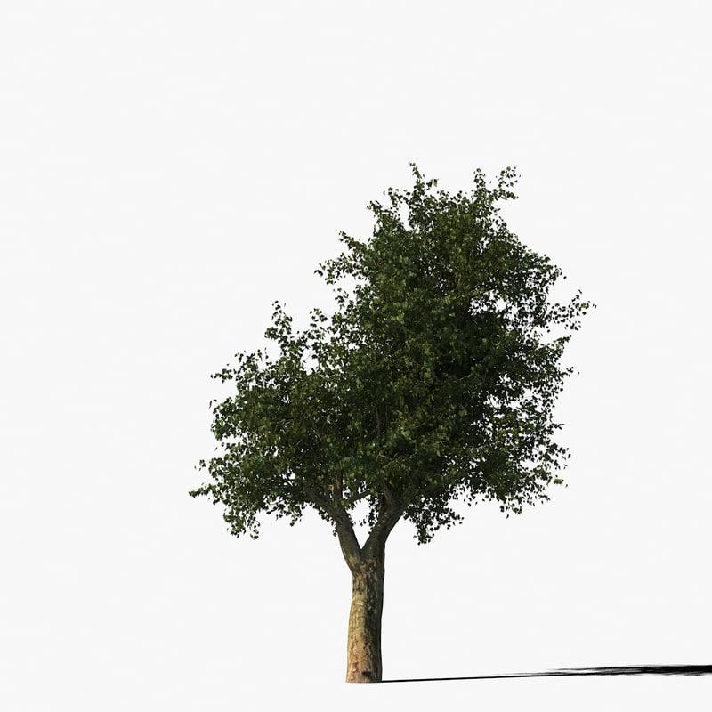 platanus_typ9_render_f_0005.jpg