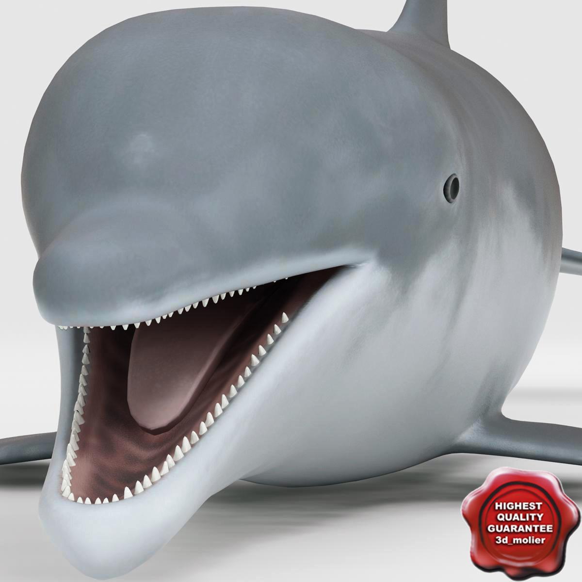 Dolphin_00.jpg
