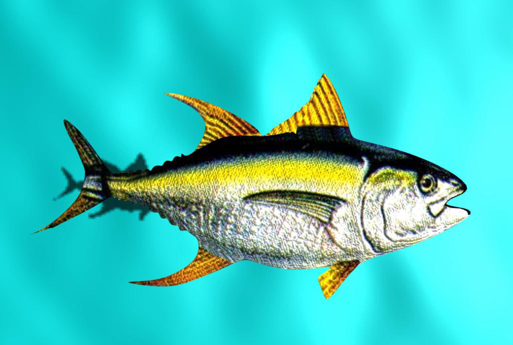 yellow fin tuna.jpg