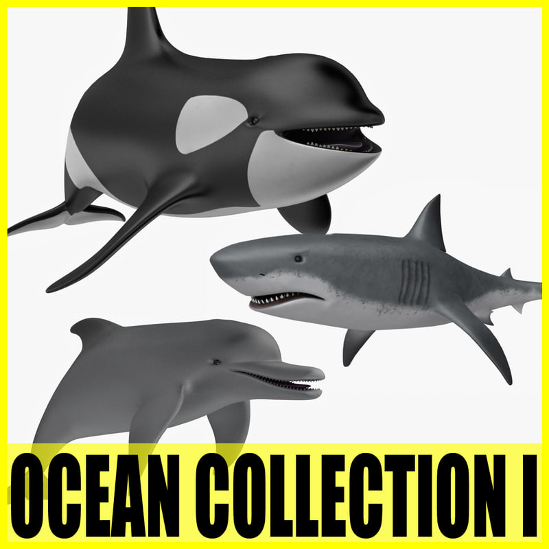 oceancollectionth.jpg