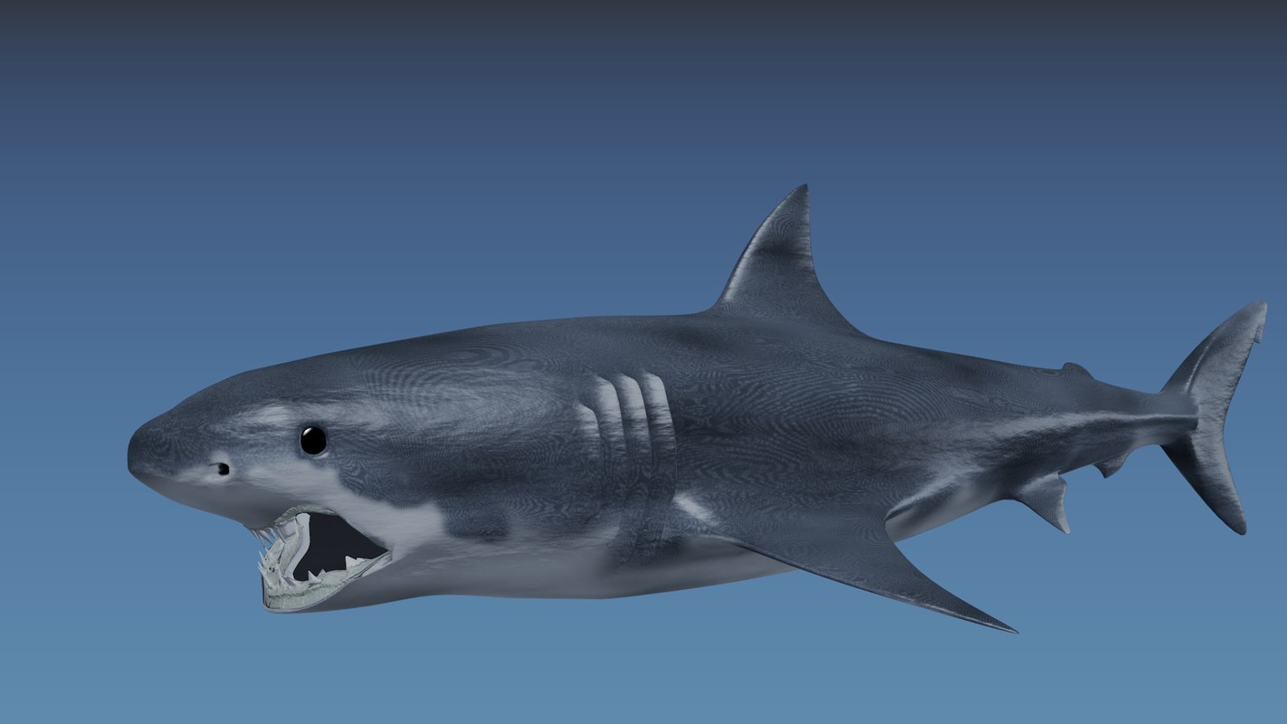 SharkComposite.png