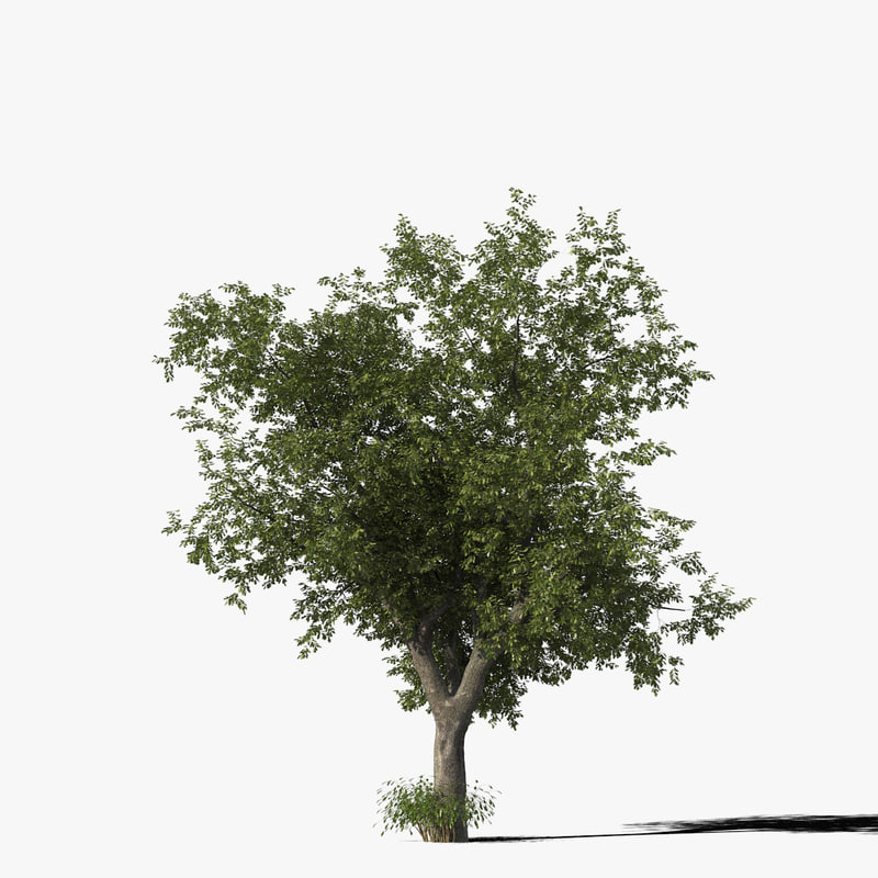 oak_typ09_render_f_0005.jpg