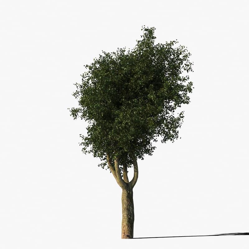 platanus_typ012_render_f_0005.jpg