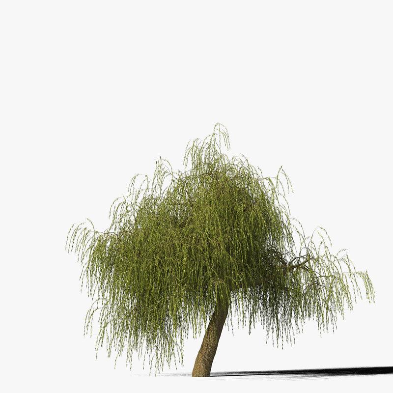 willow_typ10_render_f_0005.jpg
