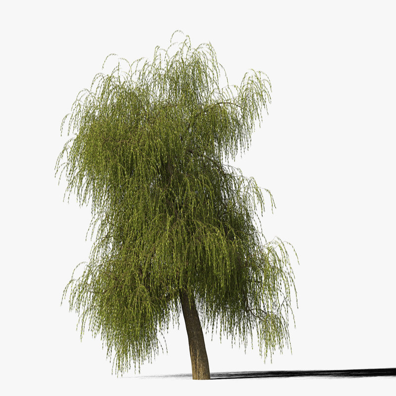 willow_typ6_render_f_0005.jpg