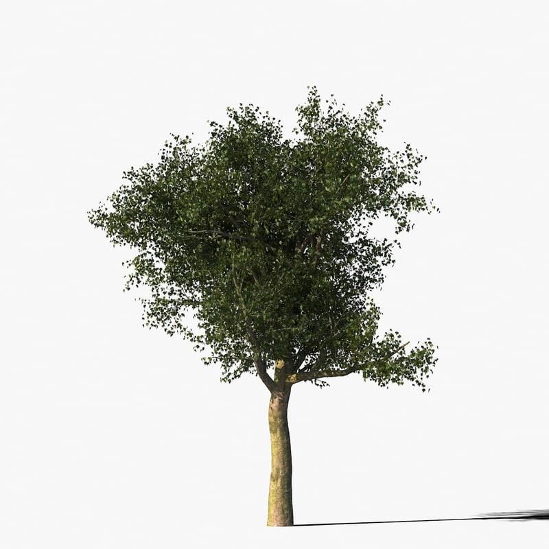 platanus_typ2_render_f_0005.jpg