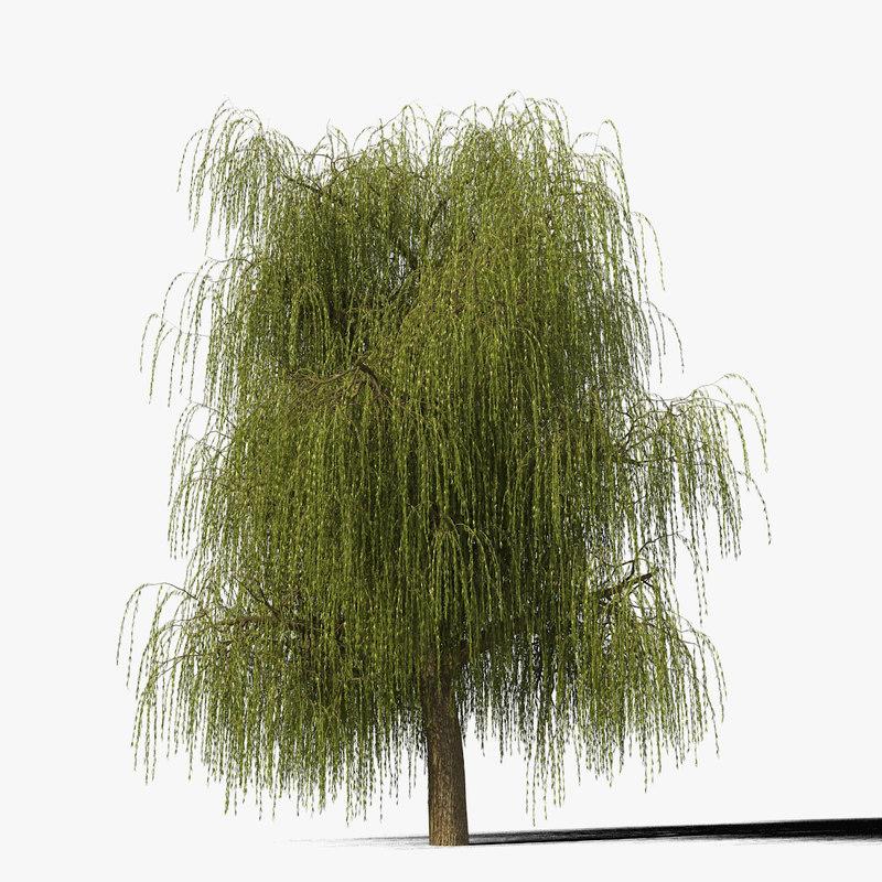 willow_typ12_render_f_0005.jpg