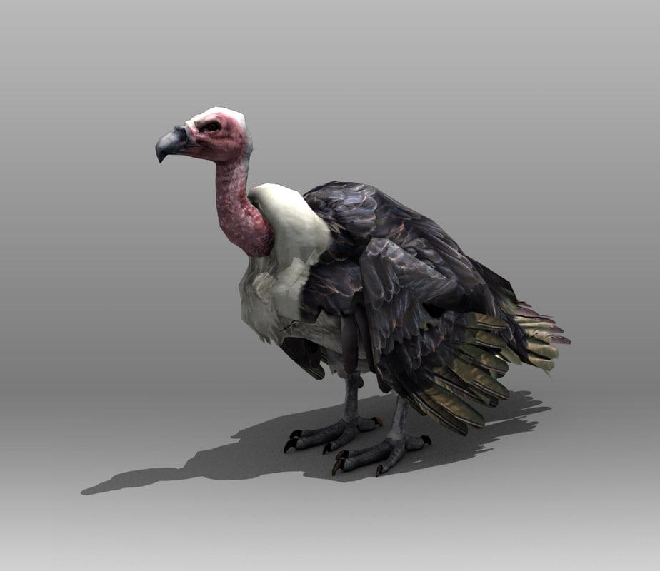 Vulture1.jpg