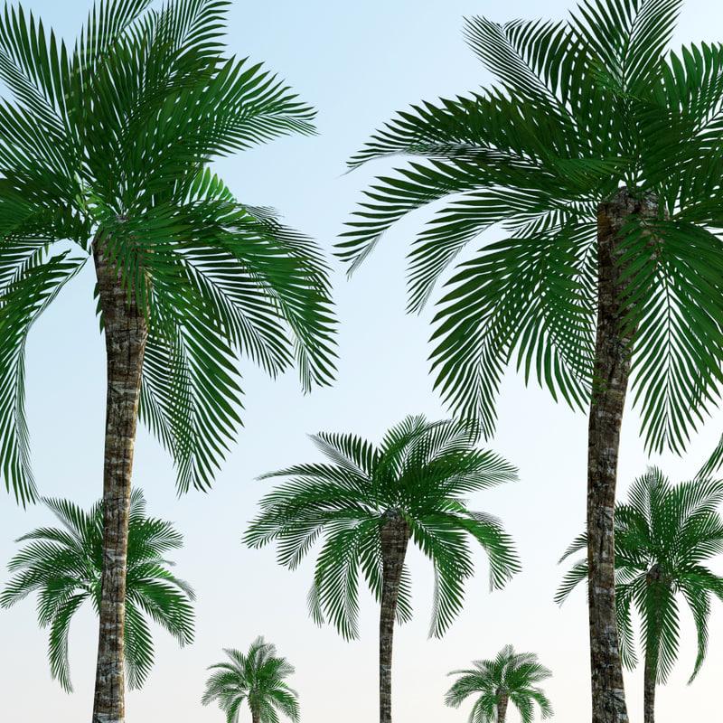 palm_trees30000.jpg