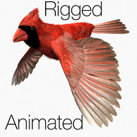 cardinal 3D models