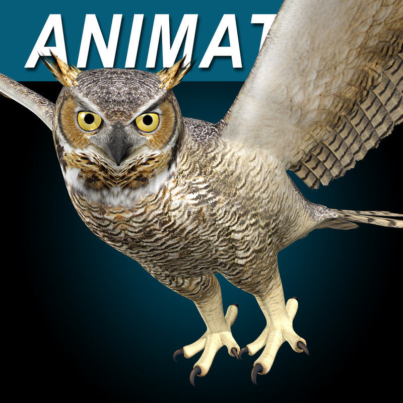 Great_Horned_Owl_AAA.jpg