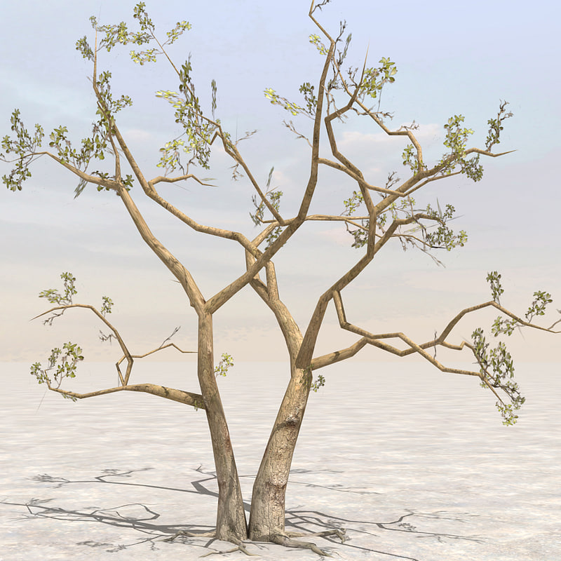 A_tree01.jpg