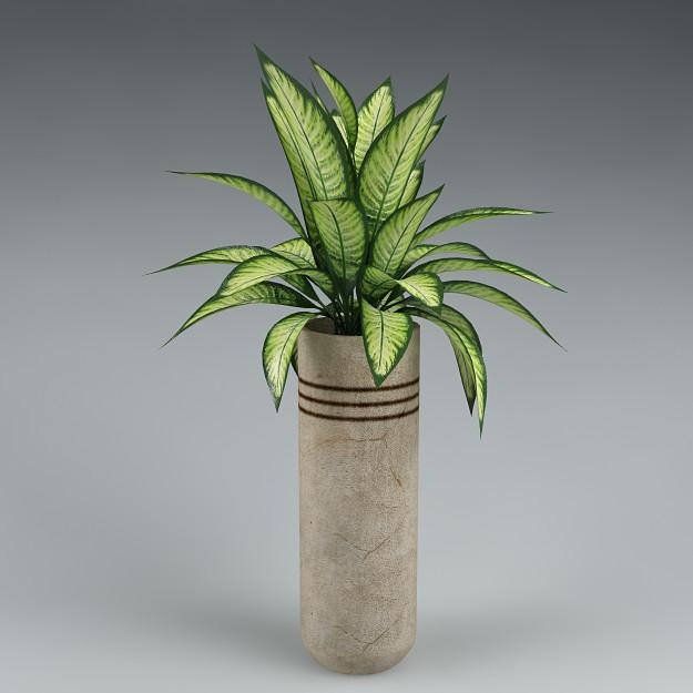 plant_46