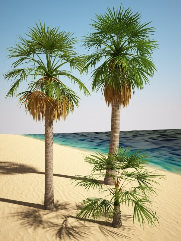 washingtonia_palm_1.jpg