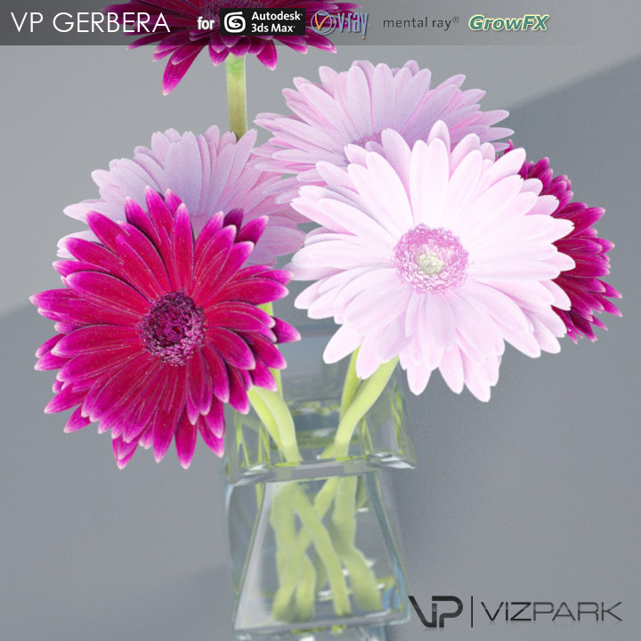VP Gerbera Flowers