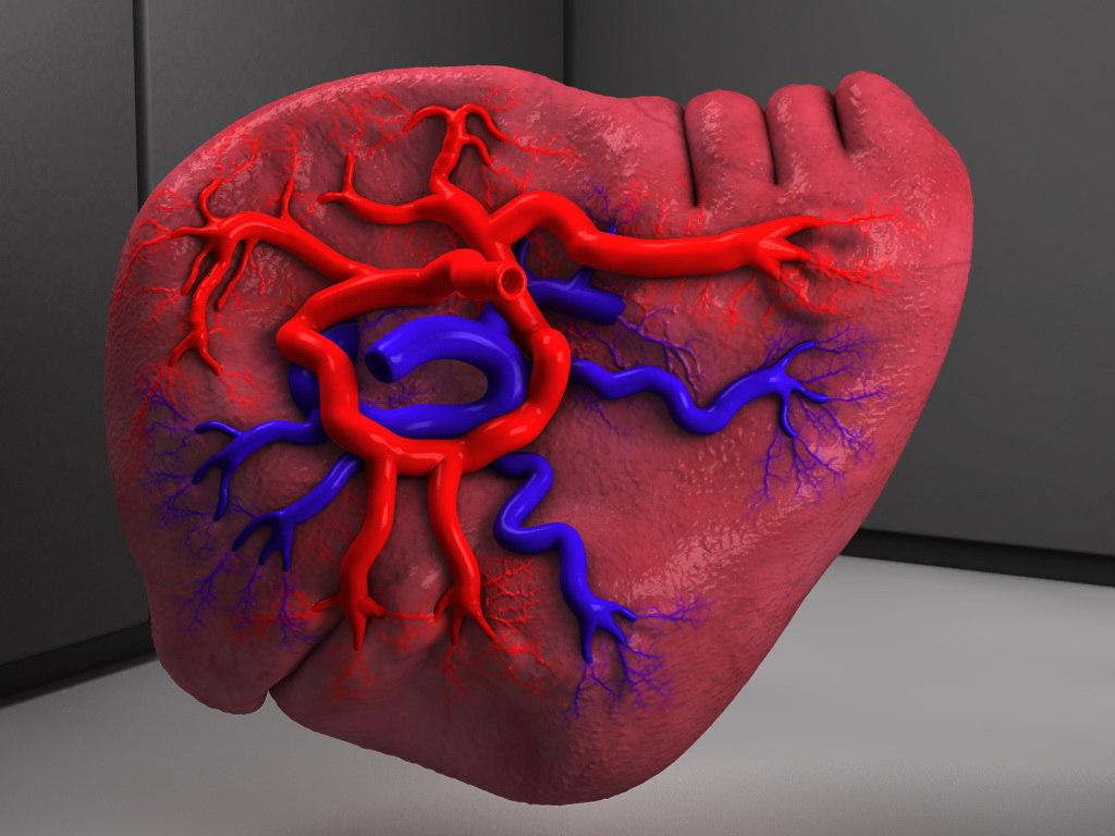 Spleen (human anatomy) Organ
