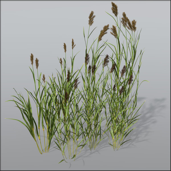 Reed grass Bundle1 3D Models