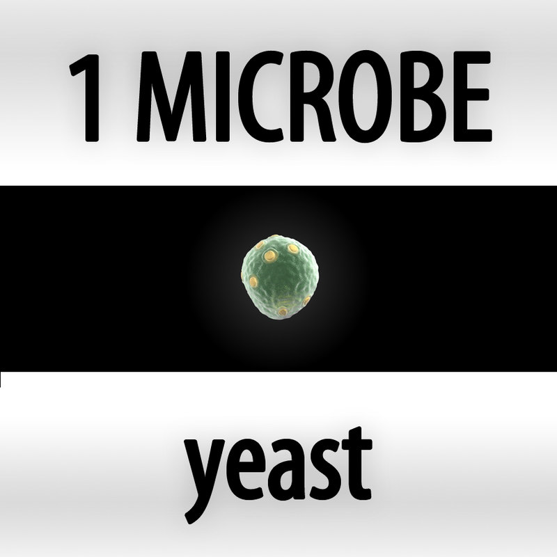 yeast - saccharomyces cerevisiae_cover.jpg