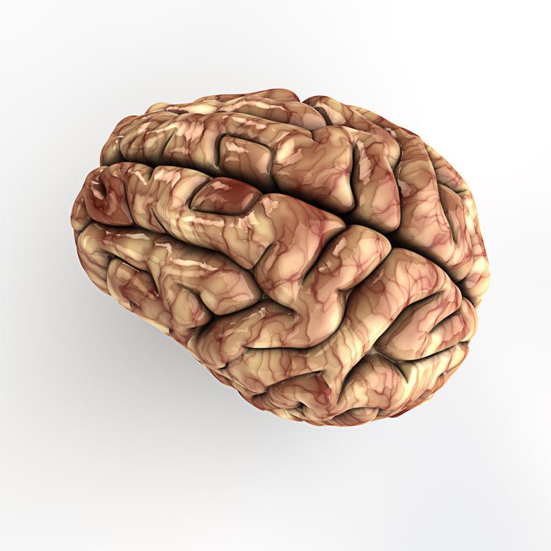 Human Brain - Cinema4D