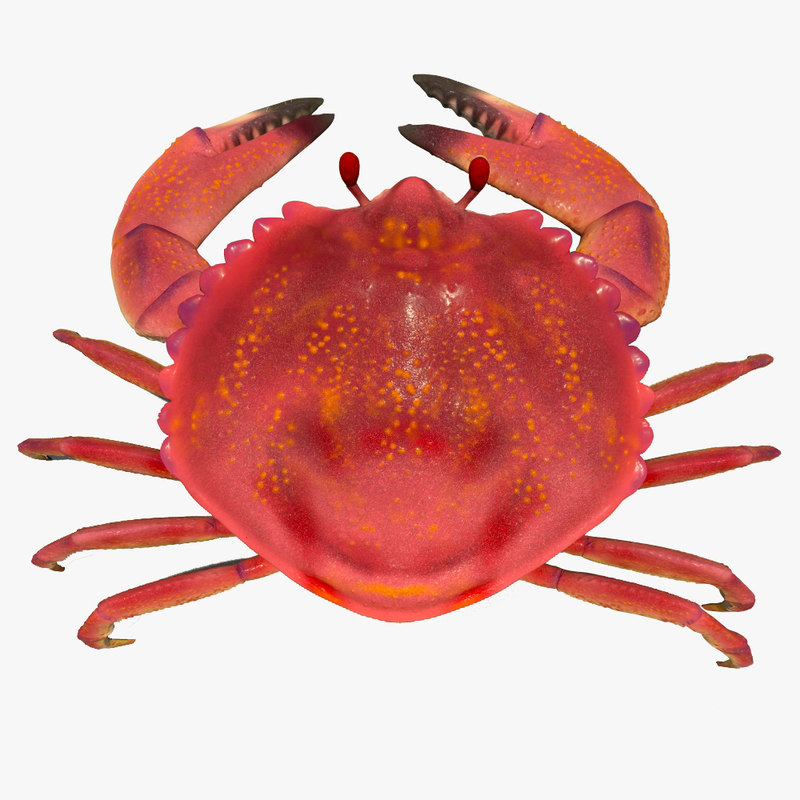 Small Crab Rigged