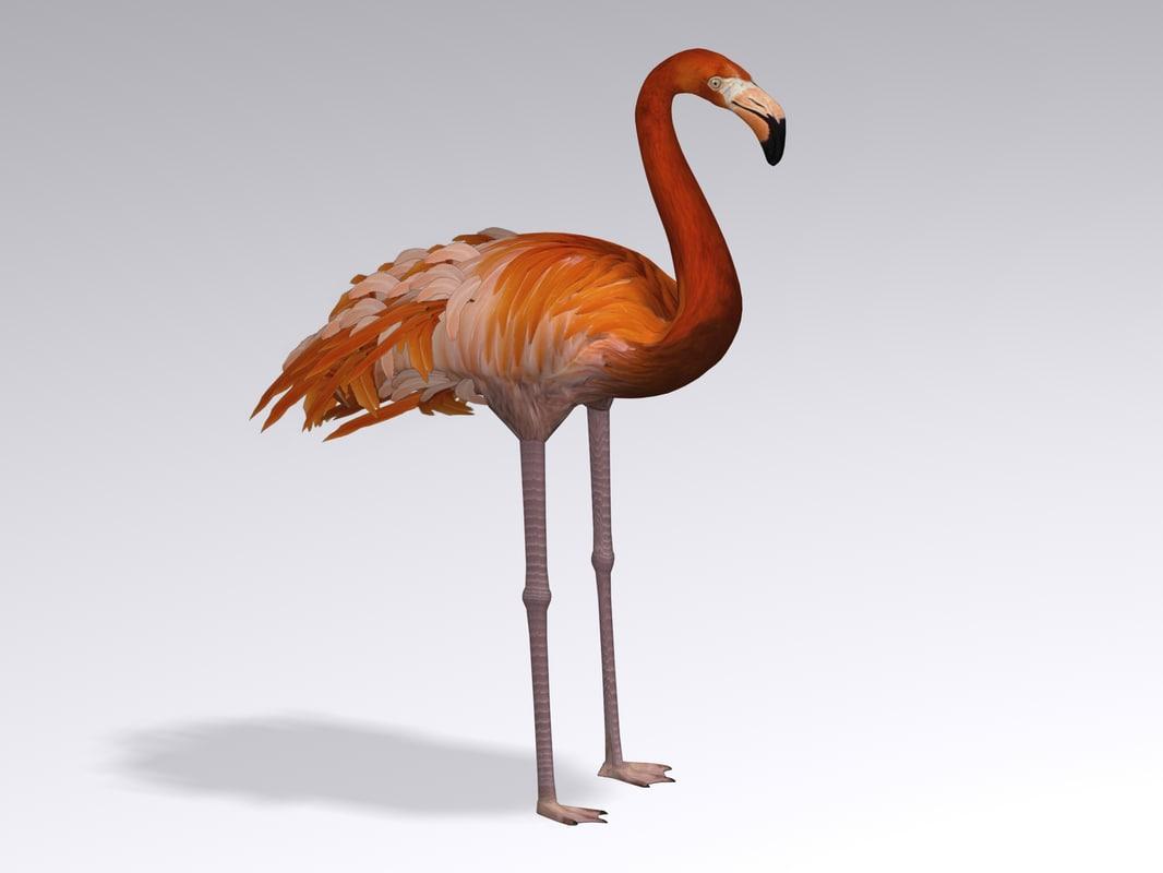 Flamingo1.1.jpg
