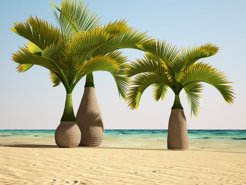 3d model bottle palm for Plante palmier exterieur