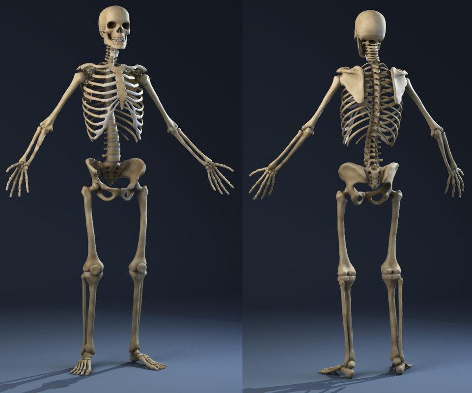 Bones01.JPG