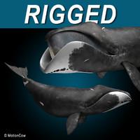 Bowhead Whale 3D models