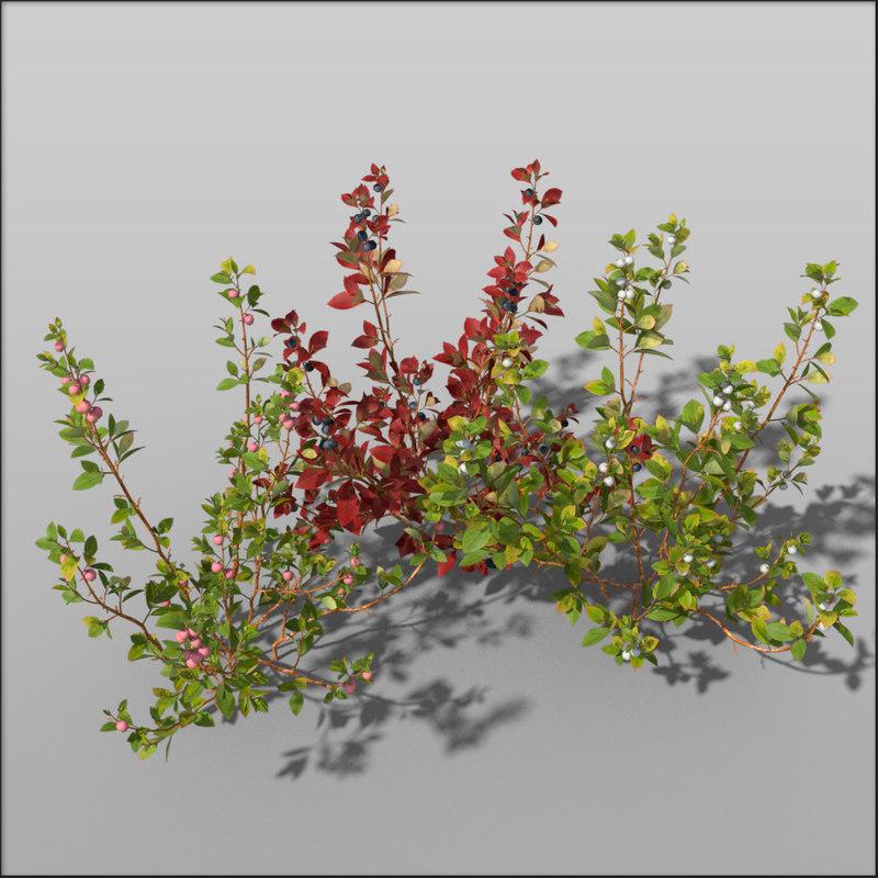 Blueberry_variant1_group.jpg