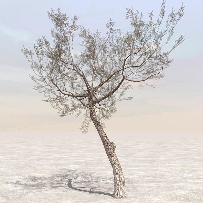 Tree5_01.jpg