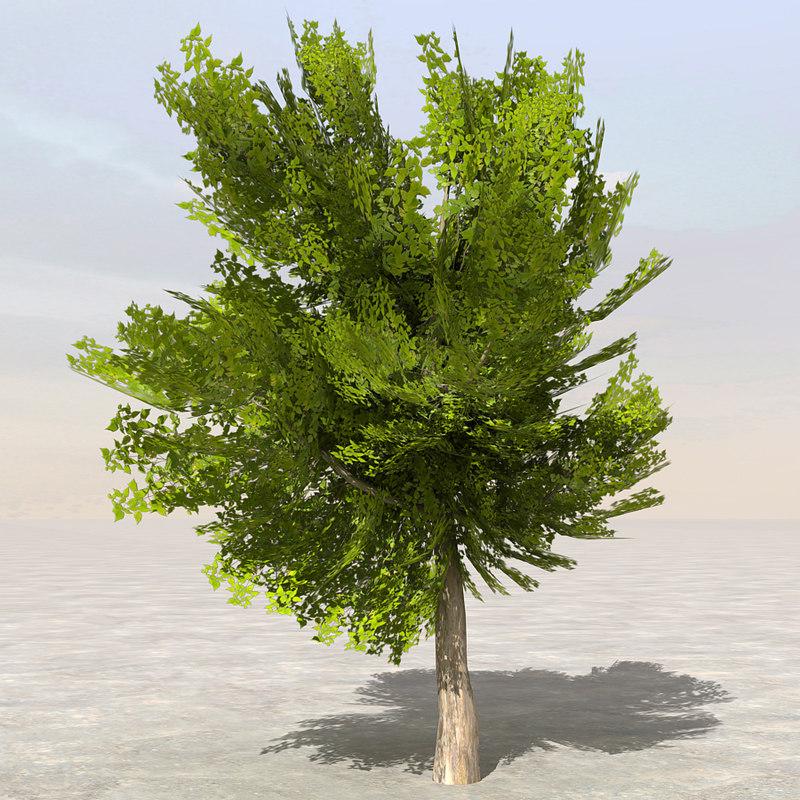 Tree8_01.jpg